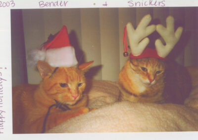 Cats wearing santa and reindeer hat