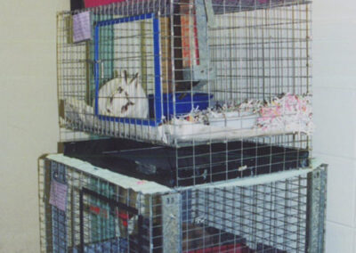 Stack rabbit cages